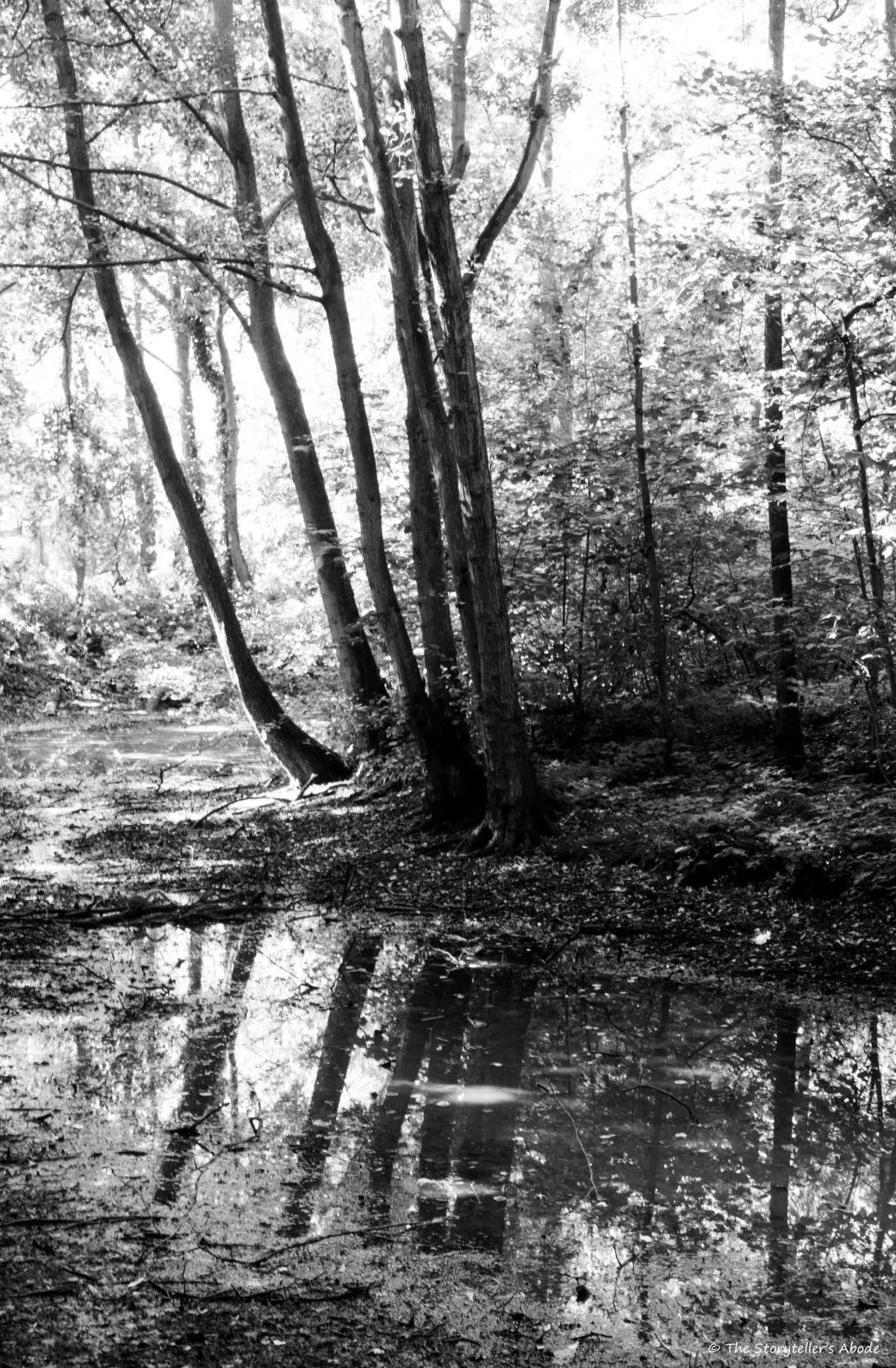 Hartsholm Stream bw