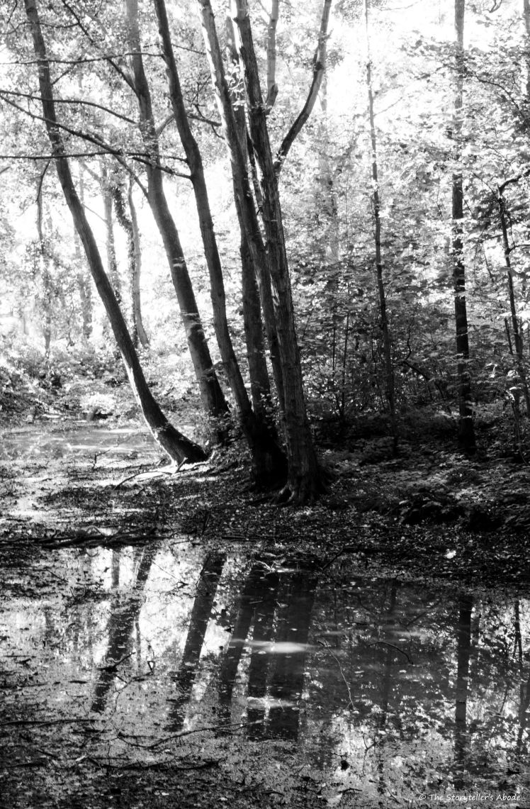 Hartsholm Stream bw