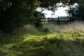 Meadow Path 2