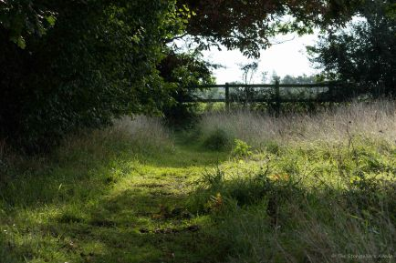 Meadow Path 2