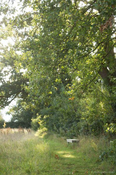 Meadow Path 4