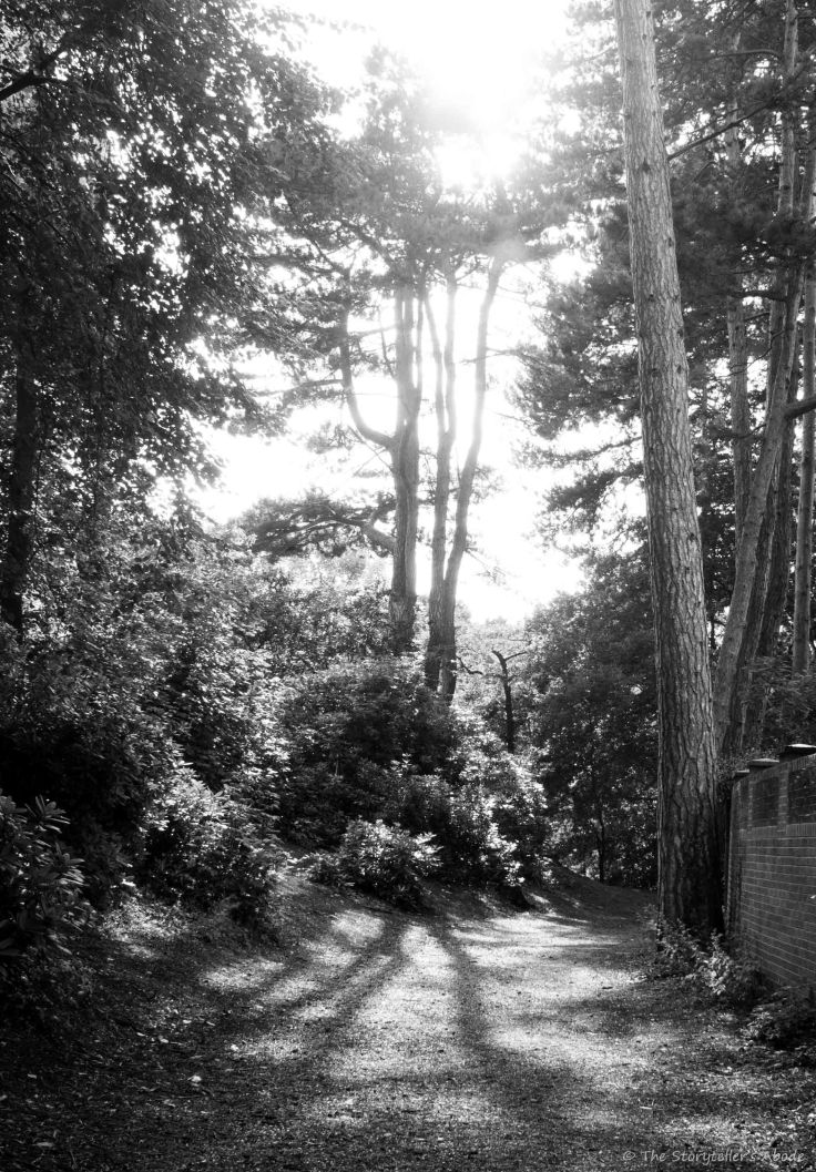 Sun through Trees BandW