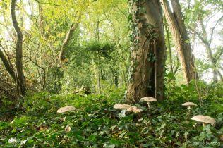 Toadstools Under Tree
