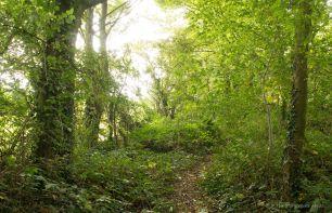 Woodland Path 3