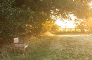 Dawn Light to Bench