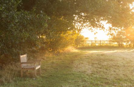 Dawn Light to Bench