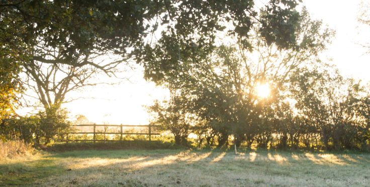 Early Light Over Meadow 3