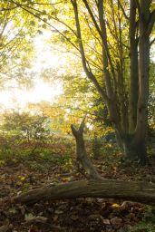 Early Morning Woodland 2
