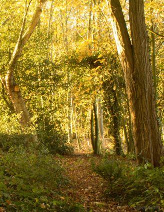 Early Morning Woodland