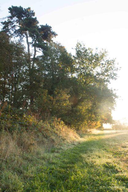 Meadow's Edge 2