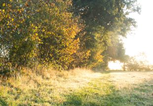 Meadow's Edge_edited-1