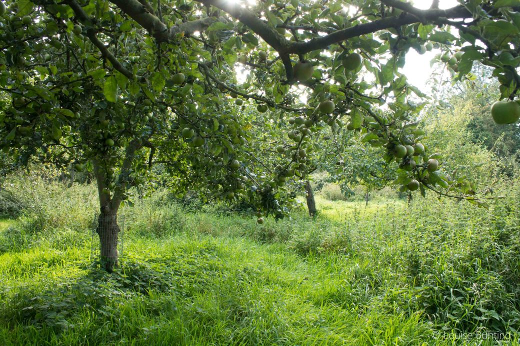 Orchard 3