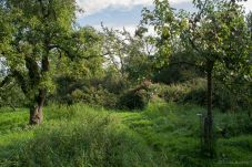 Orchard Path 3