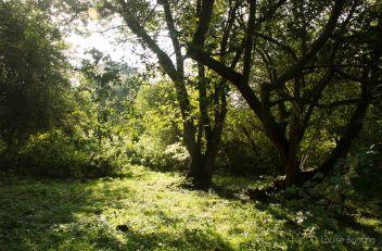 Sunlit Orchard
