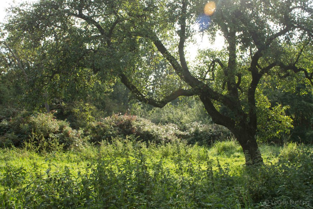 Tree with Sunbeams