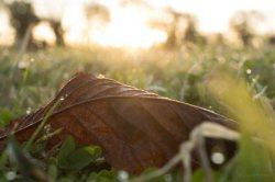 Fallen Leaf in Dawn Light