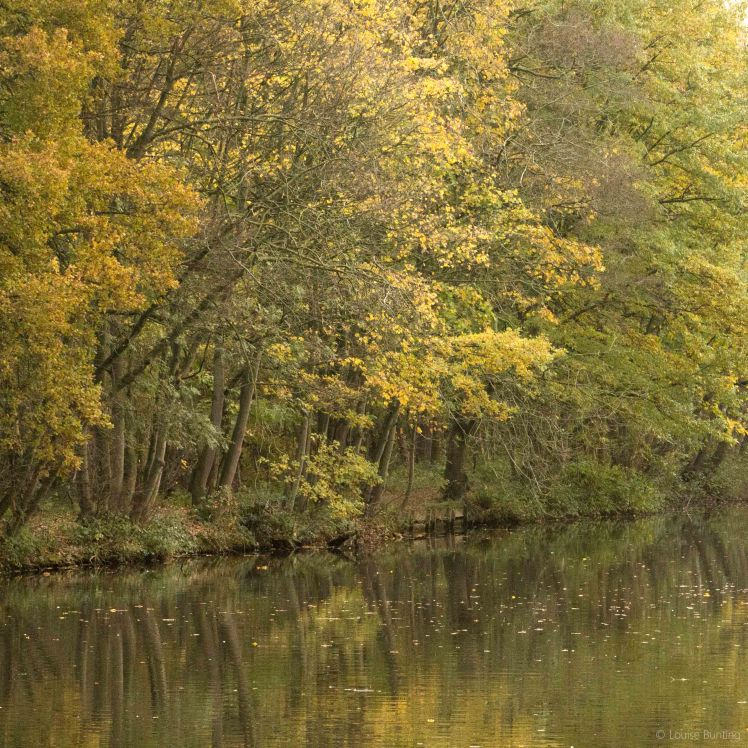 Lakeshore 3