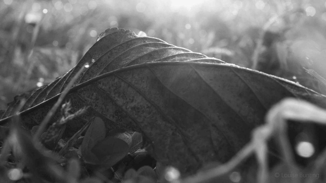 Fallen Leaf bw