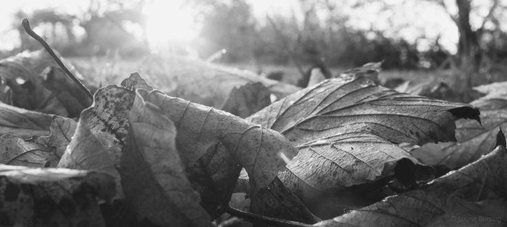 Fallen Leaves bw