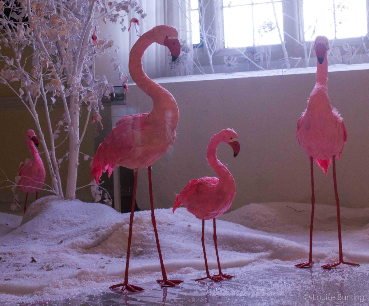 The Flamingos of Doddington Hall