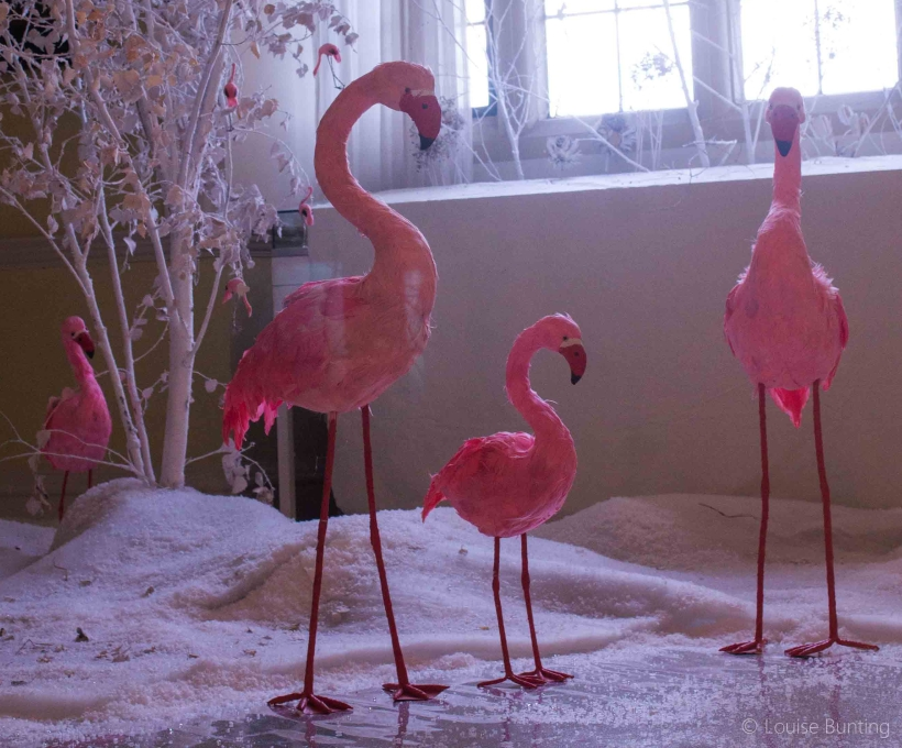 flamingo-group.jpg