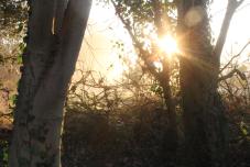 light through trees2