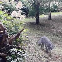 The Spirit of the Fox