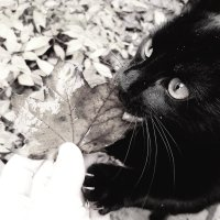 CB&W: The Kitten and the Leaf