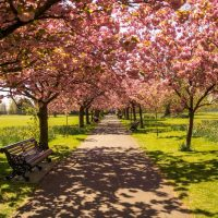 Can a value be placed on our urban green spaces?