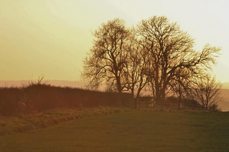 Trees in golden hour light