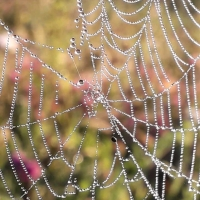 Misty Dawn and Sunlit Cobwebs