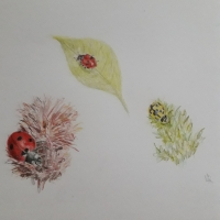 Of Tansy Lanes, Ladybirds, and Sunsets
