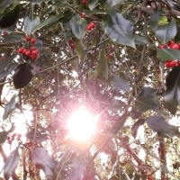 The Spirit of the Holly
