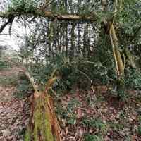 Amongst the Dead Wood