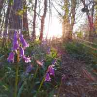 Spring's Dawn